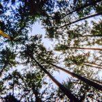 10 cosas que no sabías sobre vídeos de 360 grados